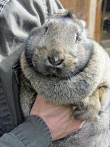 fussy bunny