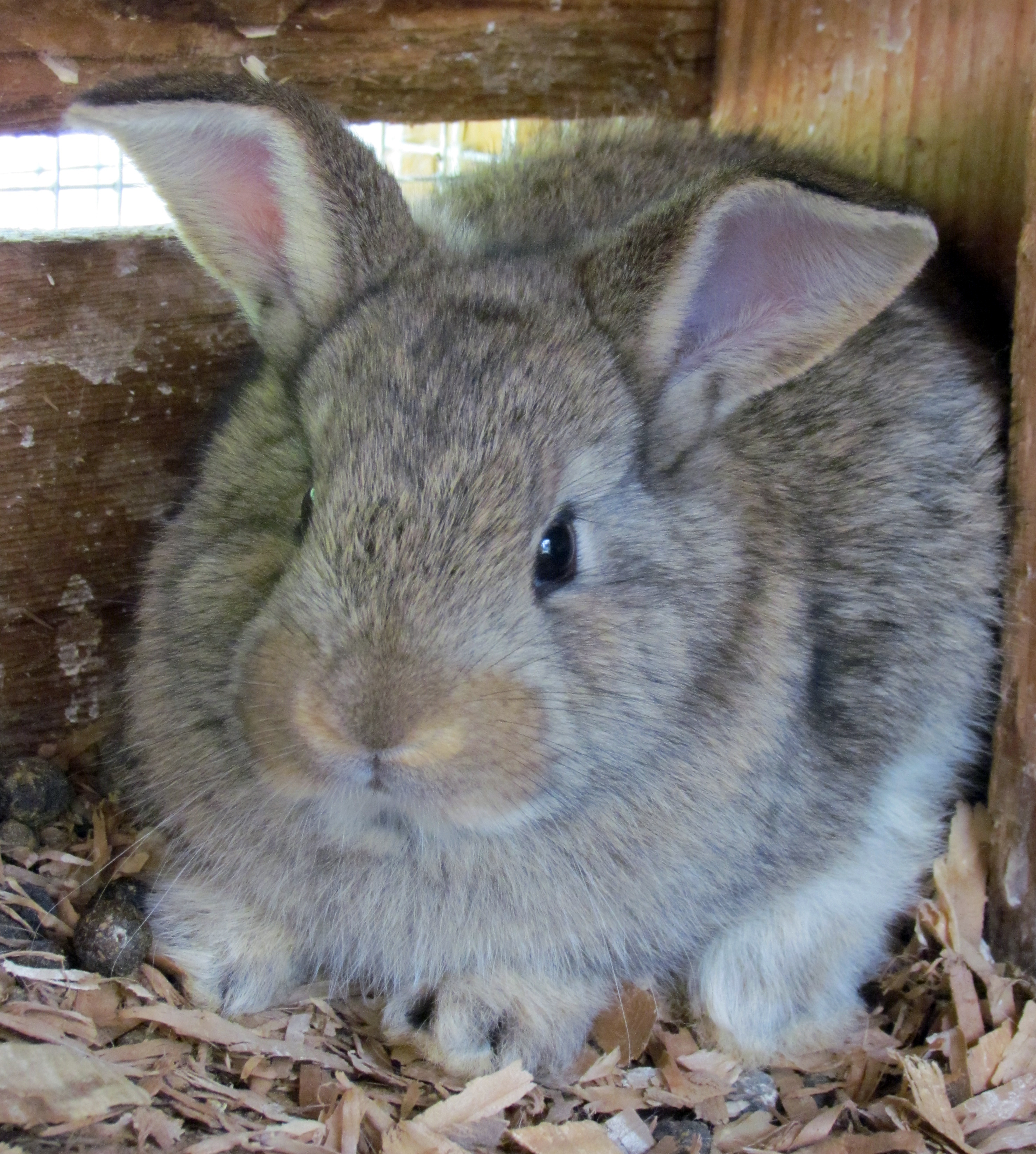 Pictures Of Fat Bunnies 44