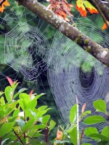 fall webs 2